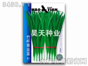 韭菜种子-竹杆青韭菜