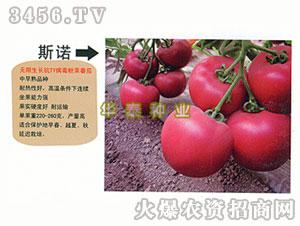 西红柿种子-承诺