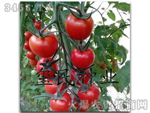 樱桃小番茄_樱桃小番茄能看见花苞了秀秀菜园我爱菜园网
