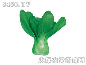 青菜种子-冬之味