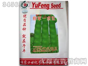 宏达精品金冠王-芸豆种子