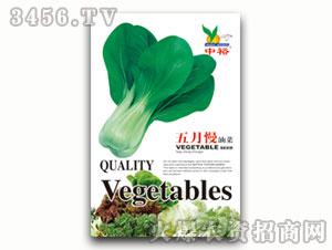 上海青-青菜种子