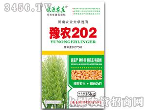 豫农202小麦种子-粮源农庄