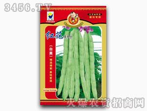 芸豆种子-超级九粒白