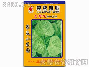 真好吃圆叶苋菜-苋菜种子