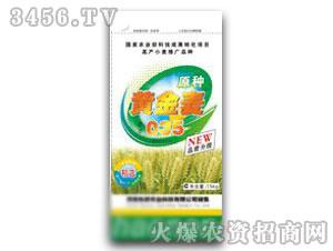 小麦种子-黄金麦豫麦035