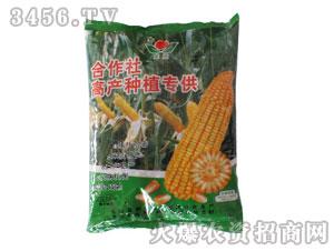 玉米种子-合作社高产种植