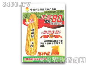 正品80-玉米种子