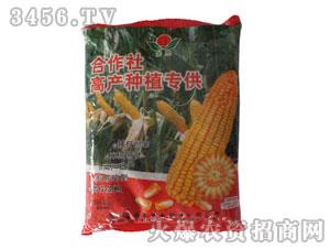 玉米种子-合作社高产种植专供