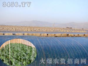 五层共挤EVA高保温日光膜-龙兴农膜