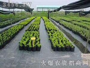 园艺用防草布-龙兴农膜