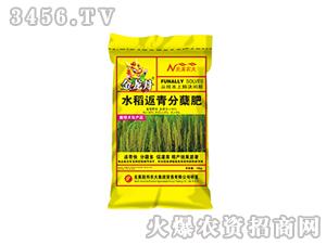水稻返青分蘖肥-金龙丹