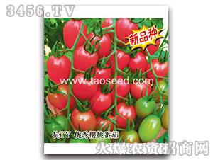 番茄种子-CT101-楚天