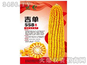 吉单558(玉米种子)-吉农