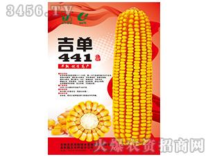 吉单441(玉米种子)-吉农