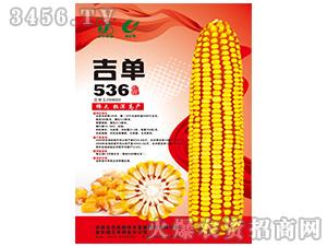 吉单536(玉米种子)-吉农