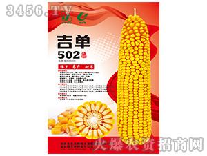 吉单502(玉米种子)-吉农