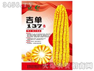 吉单137(玉米种子)-吉农