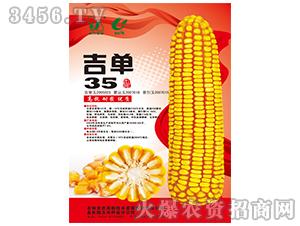 吉单35(玉米种子)-吉农