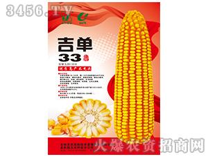 吉单33(玉米种子)-吉农