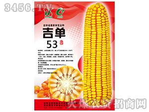 吉单53(玉米种子)-吉农