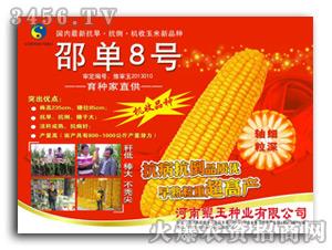 邵单8号玉米种子-鲲玉