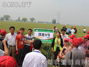 小麦种子观摩会4