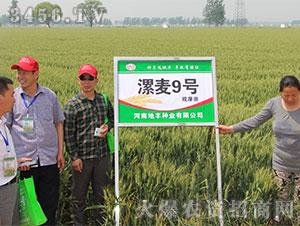 小麦种子观摩会6