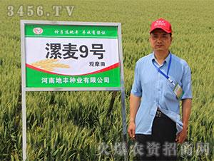 小麦种子观摩会7