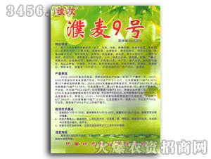 濮麦9号小麦种子-坤元种业