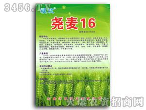 尧麦16小麦种子-坤元种业