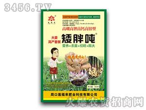 大姜高产套餐矮胖吨-莲福来