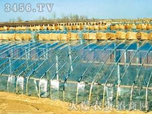 PVC农膜-喜丰塑业