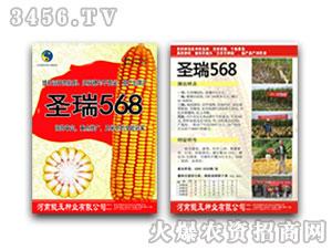 圣瑞568(玉米种子)