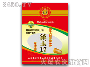 泽玉17(玉米种子)-东岳-泰山种业