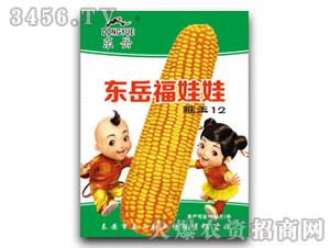 雅玉12(玉米种子)-东岳福娃娃-泰山种业