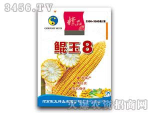 鲲玉8号(玉米种子)鲲玉种业