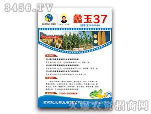 蠡玉37(玉米种子)鲲玉种业