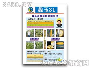 蠡玉31(玉米种子)鲲玉种业