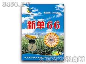 新单66(玉米种子)鲲玉种业