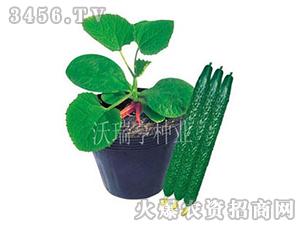 黄瓜种子-烁元103-沃瑞亨
