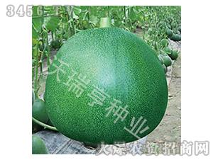 甜瓜种子-瓜瓜乐-沃瑞亨