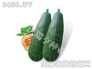 甜瓜种子-红罗蜜2号-沃瑞亨