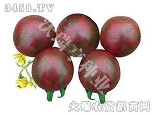 樱桃番茄杂交种子-紫妹-沃瑞亨