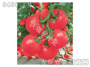 艾丽卡x-番茄种子-沃瑞亨