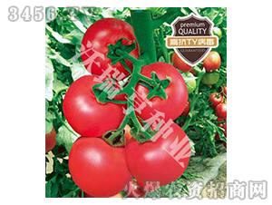 番茄种子-哈莉特772-沃瑞亨