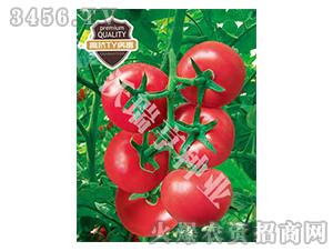 番茄种子-哈莉特717-沃瑞亨