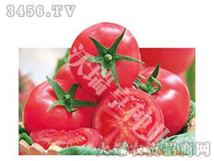 番茄种子-宣艳-沃瑞亨