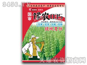 国审豫农035-小麦种
