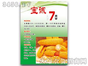 宝诚7(黑审)-玉米种子-宝诚种业